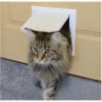 Лаз в дверь для кошки / котоход 150*150 (проем 40мм), коричневый